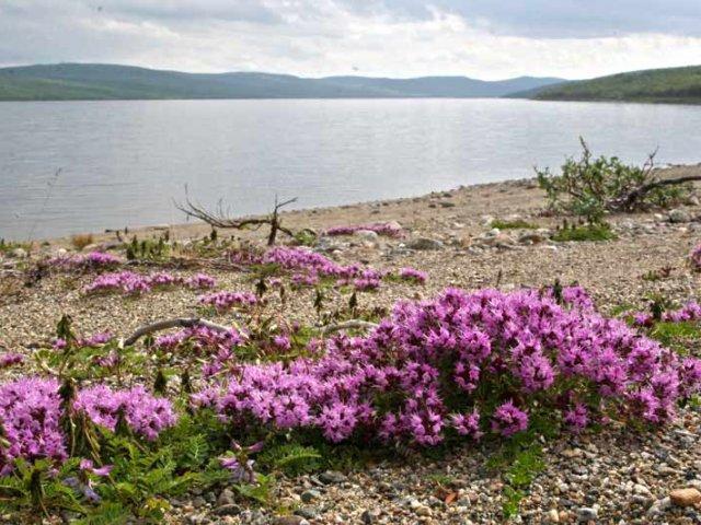 Lake-Pulmanki